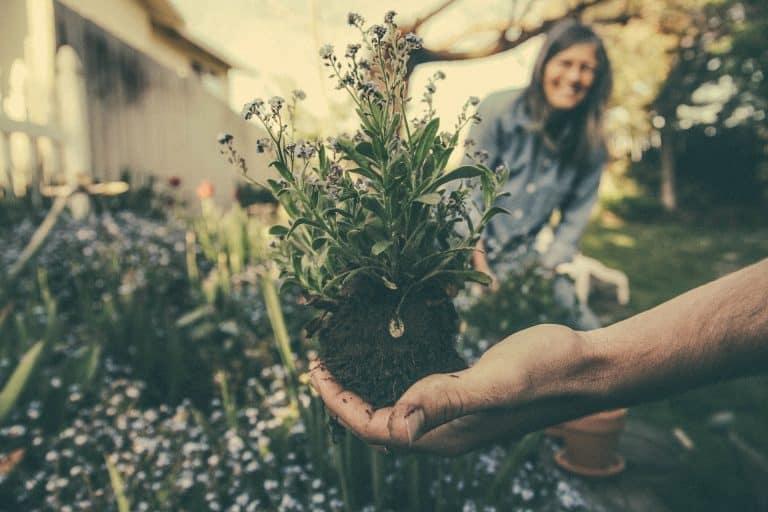 Unkraut, Pflanze