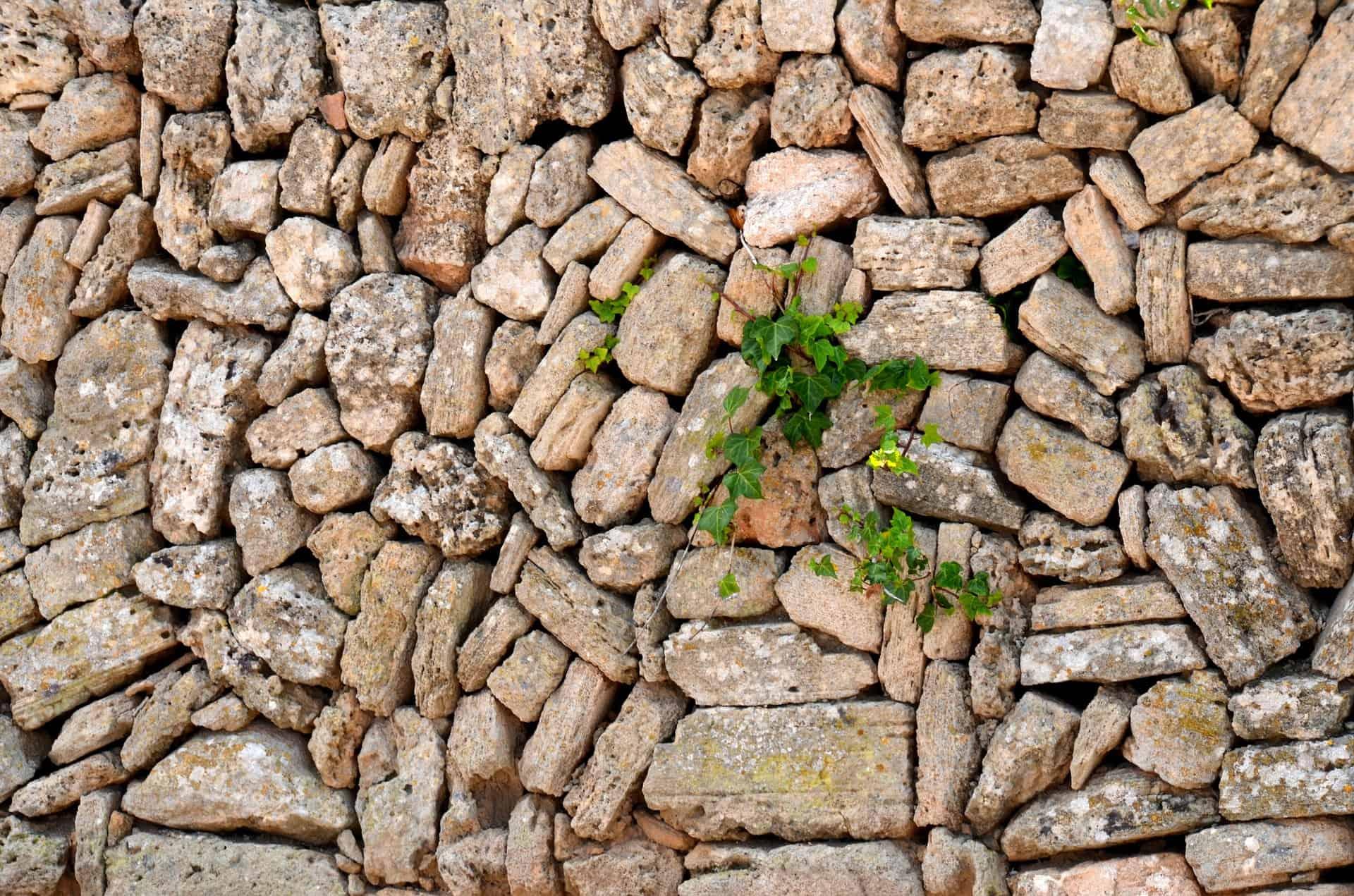 Mauer mit Pflanze